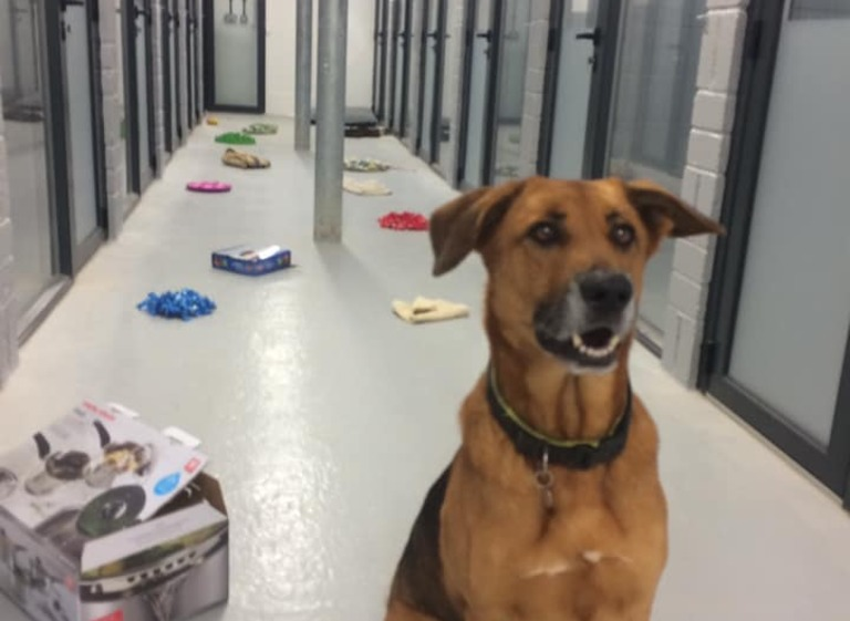 tye in kennel