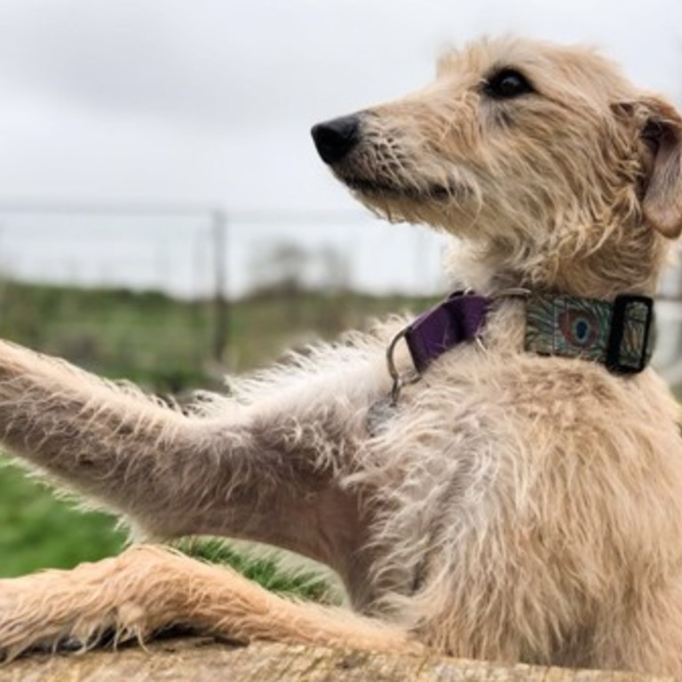 Happy Landings Dog Rescue Uk